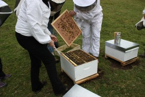 Owhango Beekeepers Club Hive